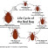 Bed Bug Bites: Signs, Symptoms and Treatment